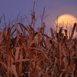 "Septembers ""Full Corn Moons"" Meaning, Folklore And Where To Find It!"